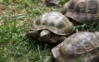 Британец научил свою черепаху ползать в паб