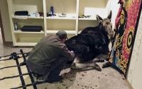 Огромный лось захватил подвал жилого дома в США
