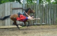 Логика запорожских властей: лошади важнее детей?