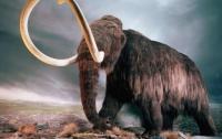 Рабочие обнаружили в Запорожской области останки мамонта