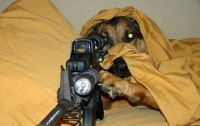 Пес выстрелил в своего хозяина из ружья