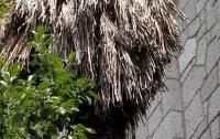 В Крыму начали гибнуть пальмы (фото)
