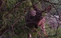 Смелый олень подошел к охотникам, чтобы понюхать ружье (видео)