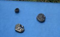 Под Житомиром откопали древний клад (ФОТО)