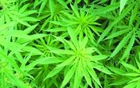 Специалисты оценили мировой рынок наркотиков в более чем 0,5 трлн долларов