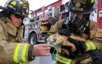 Пожарные спасли от гибели в огне игуану