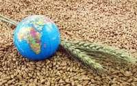 Украина станет одним из крупнейших экспортеров зерна