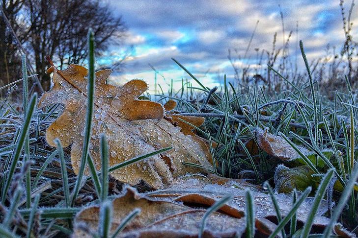 Синоптики предупредили о похолодании и первых заморозках