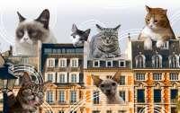 Коты, которые хотели пить, затопили многоэтажку