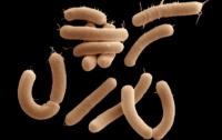 Ученые нашли способ решить проблему устойчивости бактерий к антибиотикам