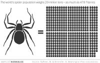 WP: пауки могут