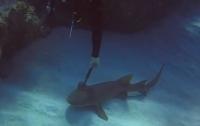 Акула попросила дайвера вытащить из нее нож (видео)