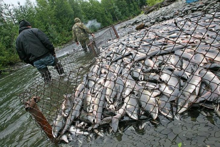На водоемах общего пользования любительским и спортивным ловом рыбных ресурсов для личного потребления могут заниматься все граждане российской федерации бесплатно.