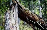 В Харькове дерево придавило троих рабочих