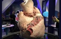 В канадском музее выставят самое большое сердце в мире (видео)