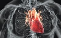 Ученые «вырастили» сердце из стволовых клеток