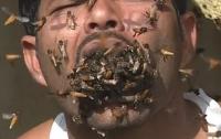 Индиец набил полный рот живыми пчелами (видео)