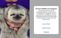 Instagram запретил снимки с дикими животным