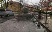Из-за непогоды в Ивано-Франковской области погибли люди