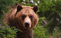 В России медведь убил охотника