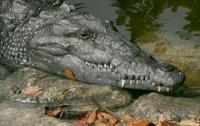Археологи нашли останки древних крокодилов в Китае