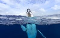 Дайвер был проглочен китом и выжил