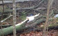 В Киеве дерево упало на женщину, собиравшую грибы