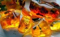 Как изменились правила добычи янтаря