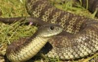 На Львовщине после укуса змеи дети попали в реанимацию