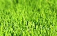 Ученые изобрели траву, которая борется с наводнением