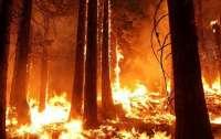 На Херсонщине начался масштабный лесной пожар, для тушения привлекли авиацию