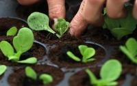 Делать компост из человеческих останков разрешили в США