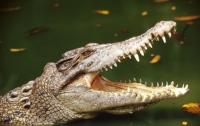 Крокодил покусал французскую туристку в Таиланде