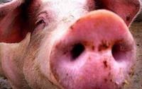 Украину ждет спад в животноводстве