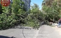 Огромное дерево упало на женщину на одной из улиц в центре Киева