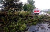 Ураган повалил 300 гектаров леса на Закарпатье