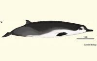 В Новой Зеландии на берег выбросилось невиданное гигантское животное (ФОТО)