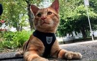 В США нашли кота-мутанта