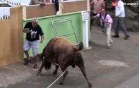 Разъяренный бык напал на прохожего в Португалии (видео)