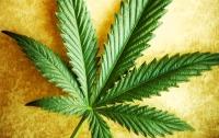 Заправленный марихуаной автомобиль обнаружили в Харьковской области на границе с РФ