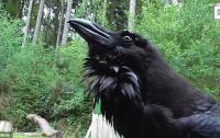 Говорящий на немецком ворон стал звездой зоопарка (видео)