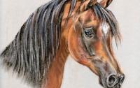 В Швеции торговые компании стали получать по почте лошадиные головы