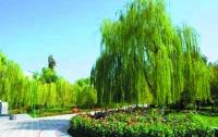 Туркменистан превратится в цветущий сад