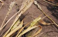 Украину ждет продовольственный кризис