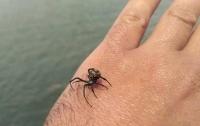 Одесситка попала в реанимацию после укуса ядовитого паука