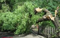 В Украине непогода оставила без света 426 населенных пунктов