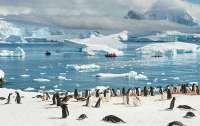 Выделены деньги на закупку судна для изучения Антарктиды (фото)