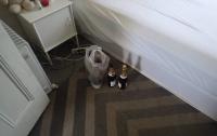 Австралийский вор, напившись шампанского, уснул в кровати жертвы