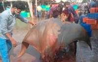 Рыбаки случайно поймали огромную рыбу весом 800 килограммов