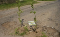 Одесситы высадили в ямы на дороге деревья (ФОТО)